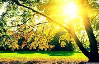 sunshine-forest-tree