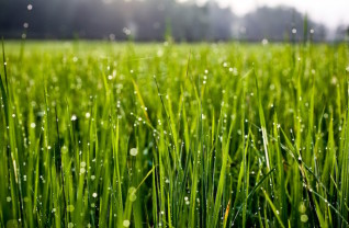 ws_Water_Drops_Grass_Close_Up_1920x1080