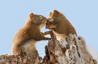 animal-love-couples-11